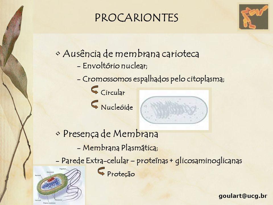 PROCARIONTES Ausência de membrana carioteca Presença de Membrana