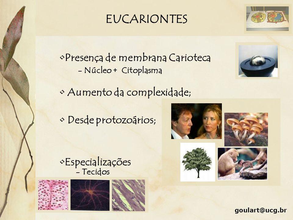 EUCARIONTES Presença de membrana Carioteca Aumento da complexidade;