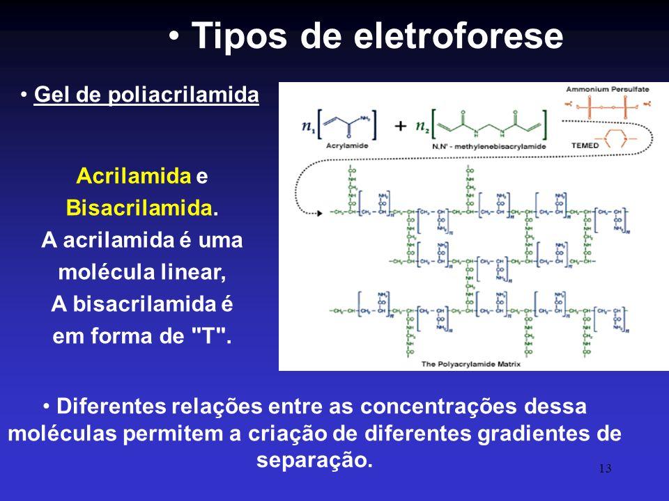 Tipos de eletroforese Gel de poliacrilamida
