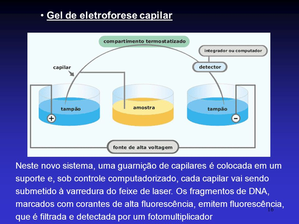 Gel de eletroforese capilar