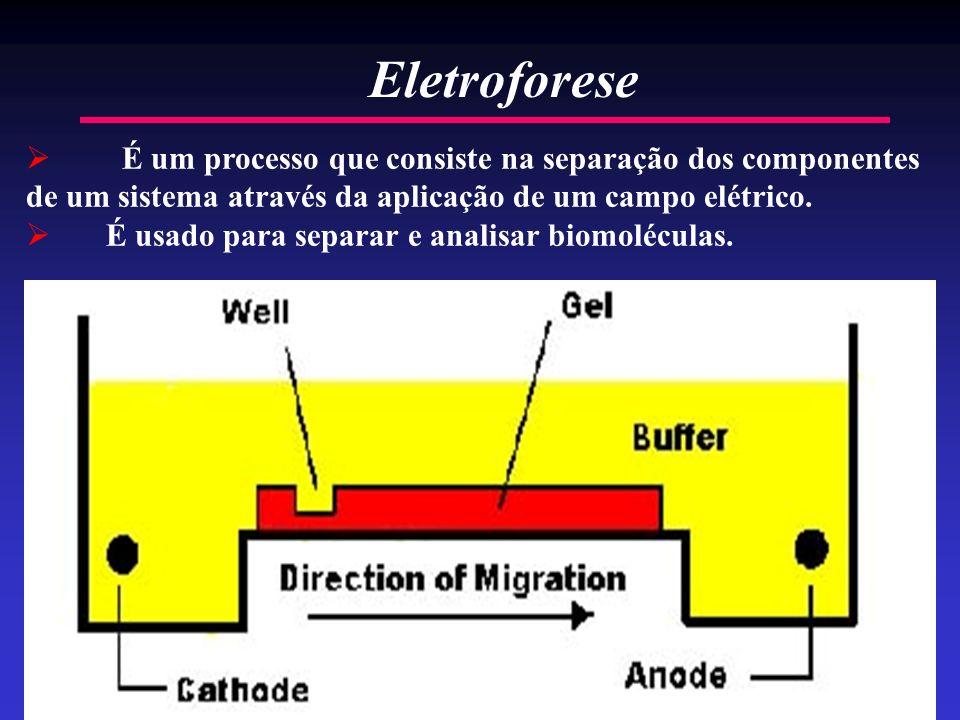 Eletroforese É um processo que consiste na separação dos componentes de um sistema através da aplicação de um campo elétrico.