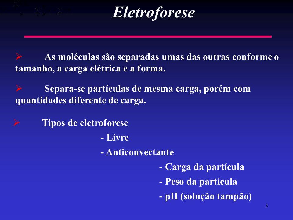 Eletroforese As moléculas são separadas umas das outras conforme o tamanho, a carga elétrica e a forma.