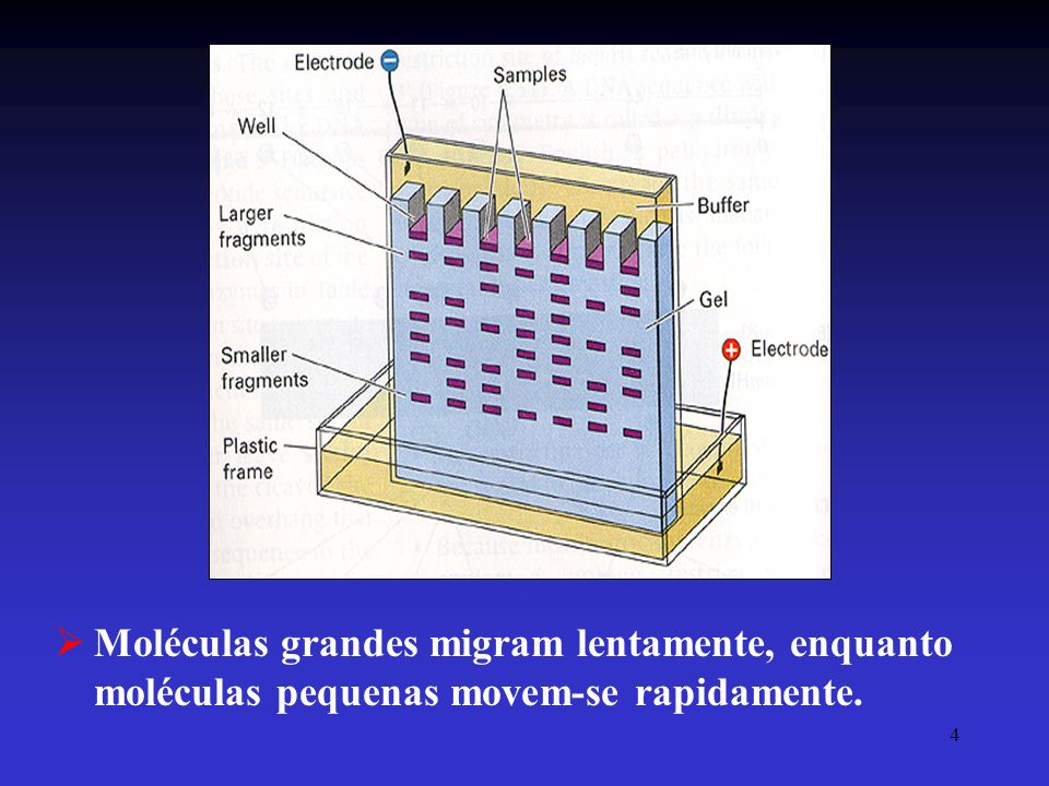 Moléculas grandes migram lentamente, enquanto moléculas pequenas movem-se rapidamente.