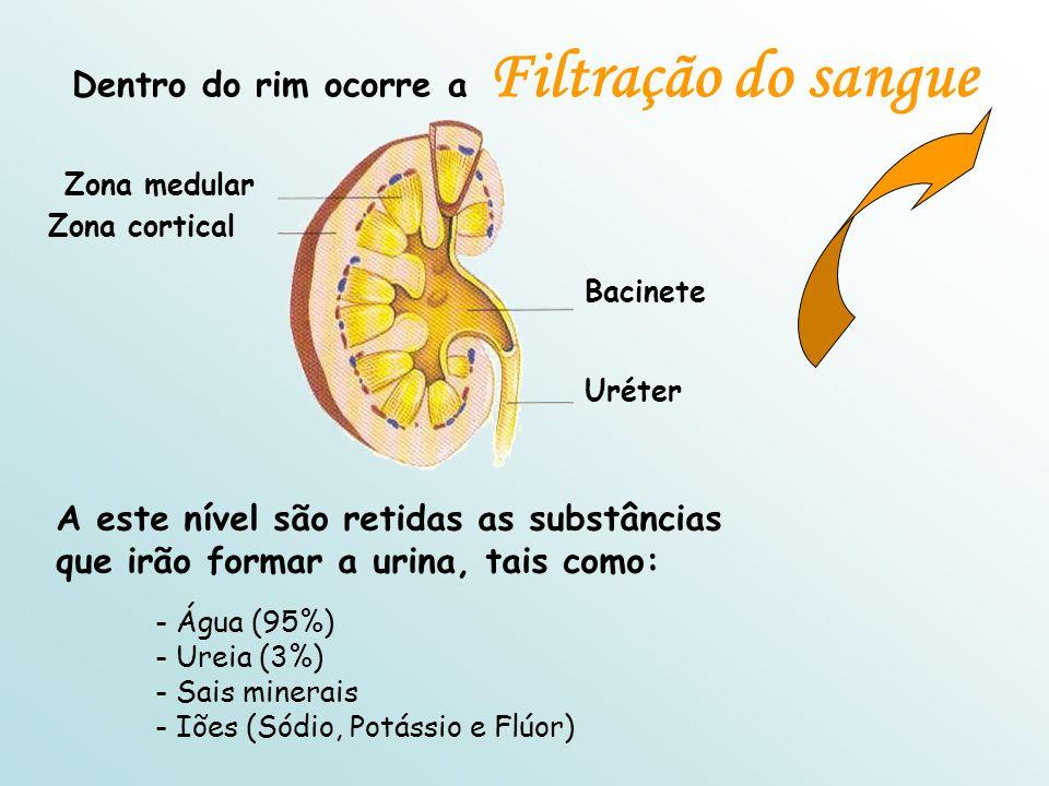 Dentro do rim ocorre a Filtração do sangue