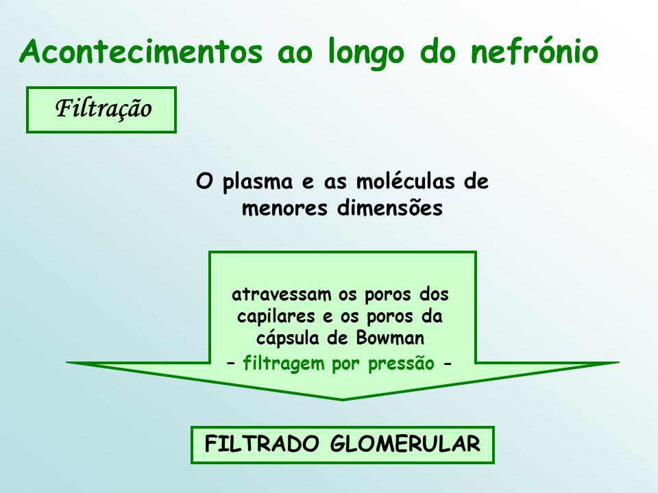 O plasma e as moléculas de menores dimensões