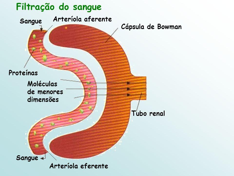 Filtração do sangue Arteríola aferente Sangue Cápsula de Bowman