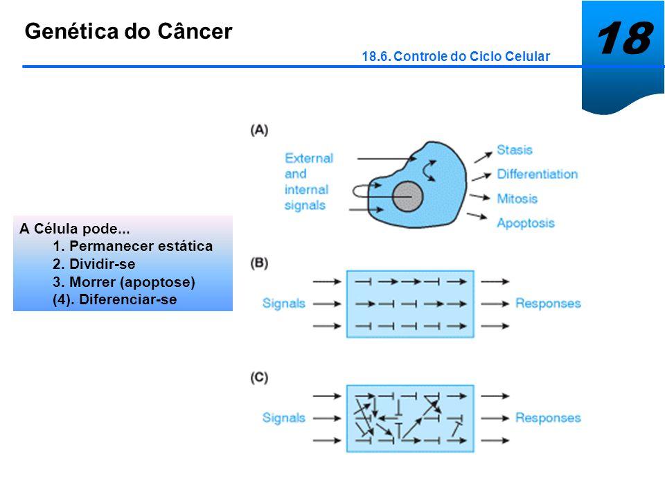 18 Genética do Câncer A Célula pode... 1. Permanecer estática