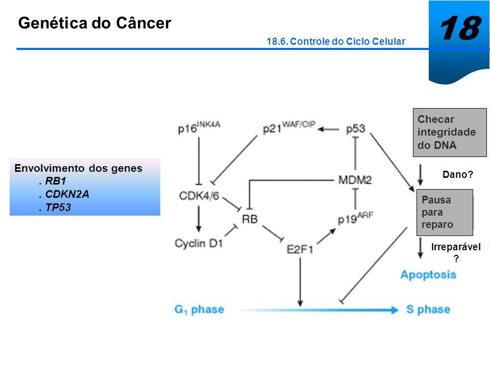 18 Genética do Câncer Checar integridade do DNA Envolvimento dos genes
