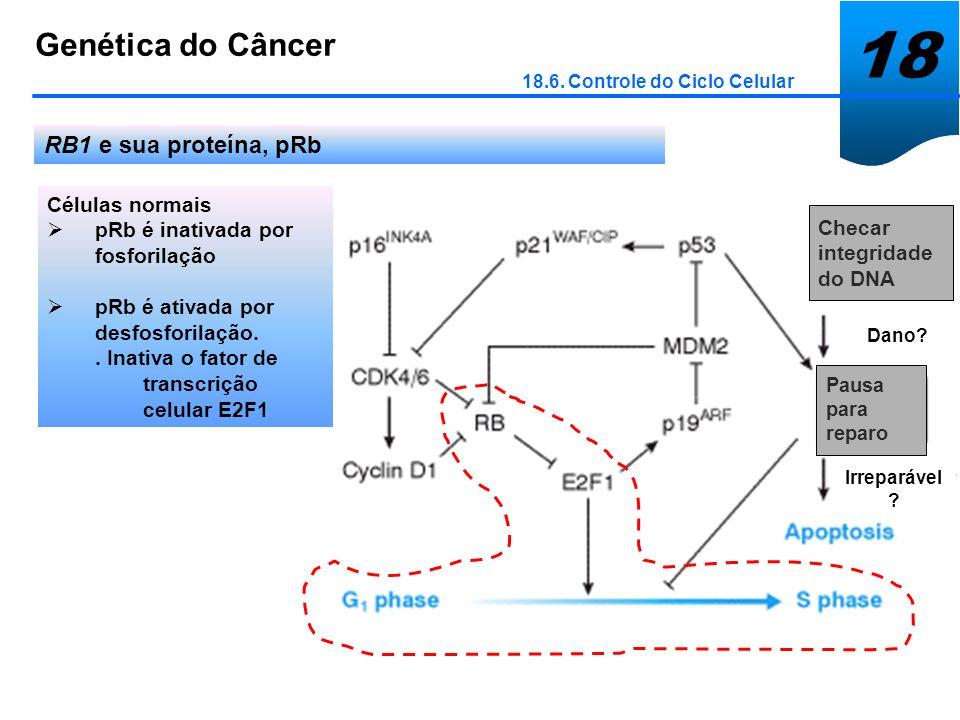 18 Genética do Câncer RB1 e sua proteína, pRb Células normais