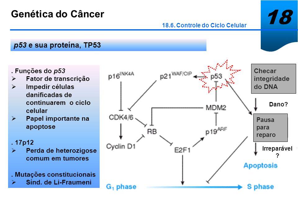 18 Genética do Câncer p53 e sua proteína, TP53 . Funções do p53