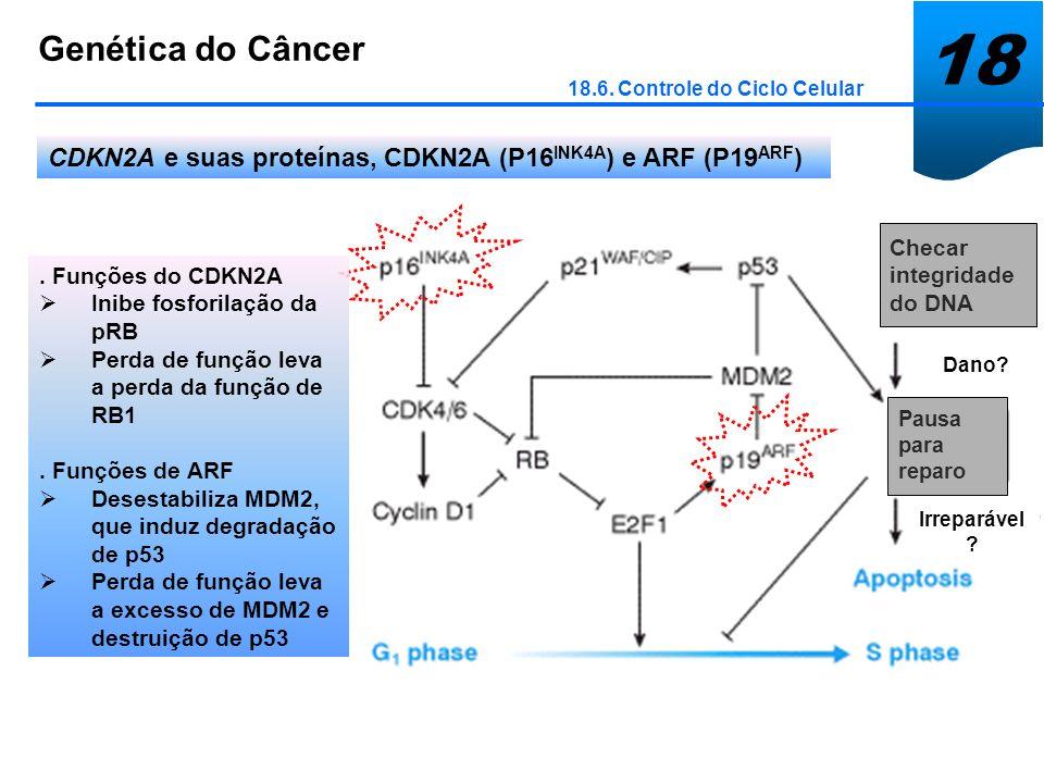 18 Genética do Câncer. 18.6. Controle do Ciclo Celular. CDKN2A e suas proteínas, CDKN2A (P16INK4A) e ARF (P19ARF)