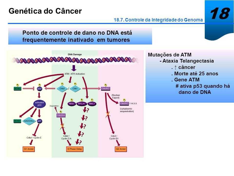 18 Genética do Câncer. 18.7. Controle da Integridade do Genoma. Ponto de controle de dano no DNA está frequentemente inativado em tumores.