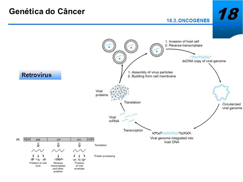 18 Genética do Câncer 18.3. ONCOGENES Retrovírus