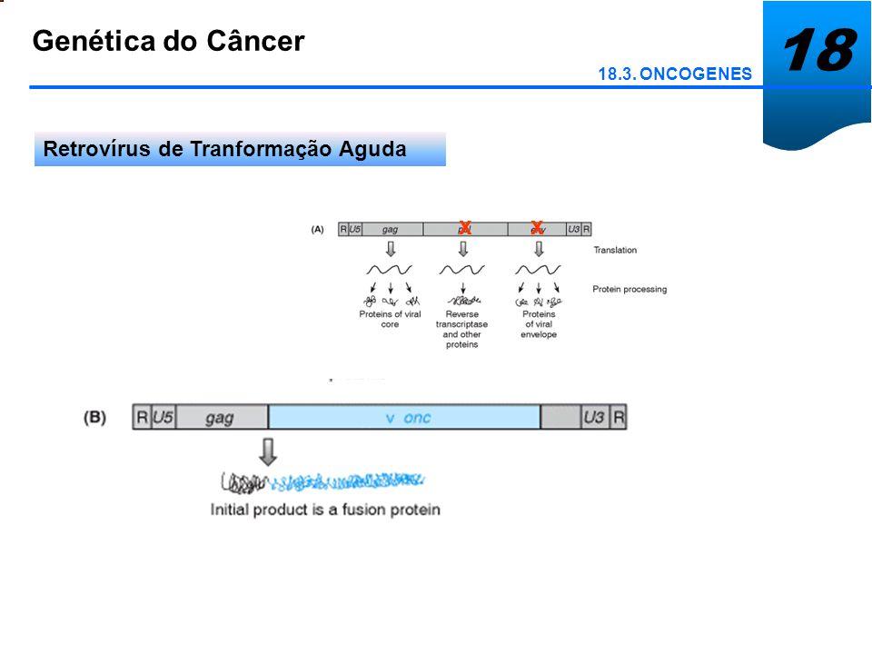 18 Genética do Câncer x x Retrovírus de Tranformação Aguda
