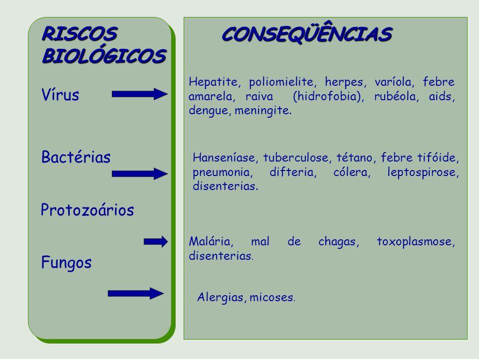RISCOS BIOLÓGICOS CONSEQÜÊNCIAS Vírus Bactérias Protozoários Fungos