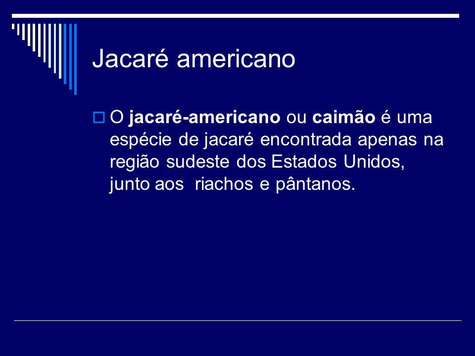 Jacaré americano