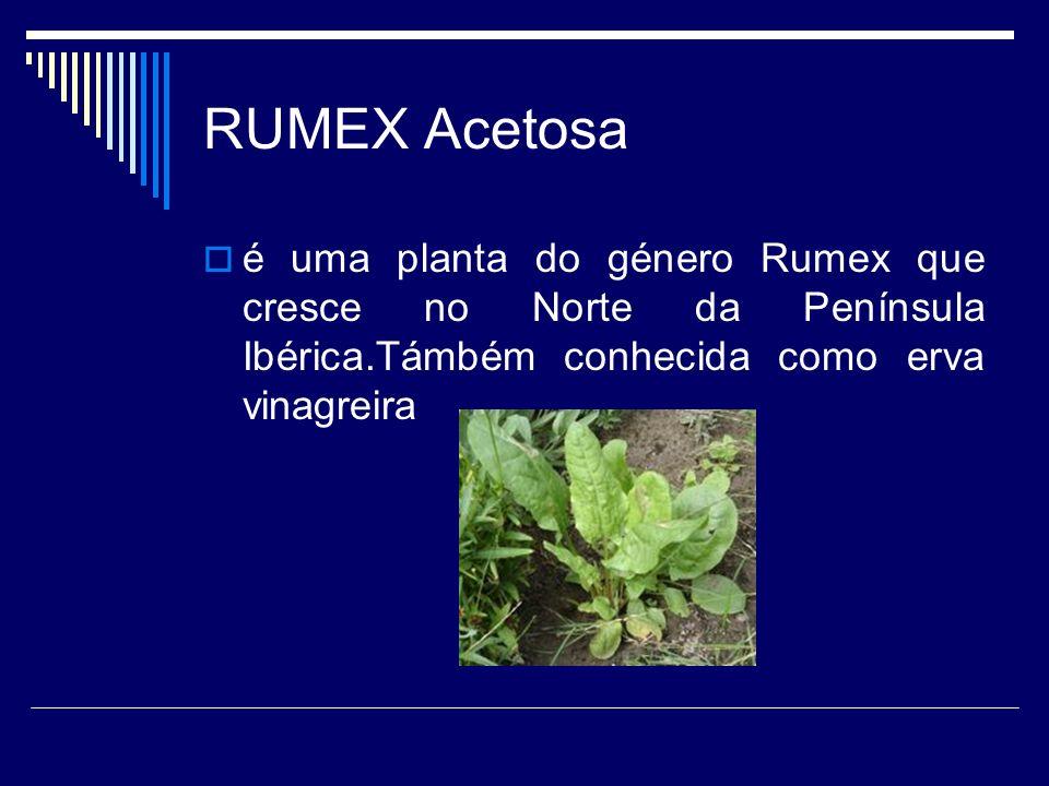 RUMEX Acetosa é uma planta do género Rumex que cresce no Norte da Península Ibérica.Támbém conhecida como erva vinagreira.