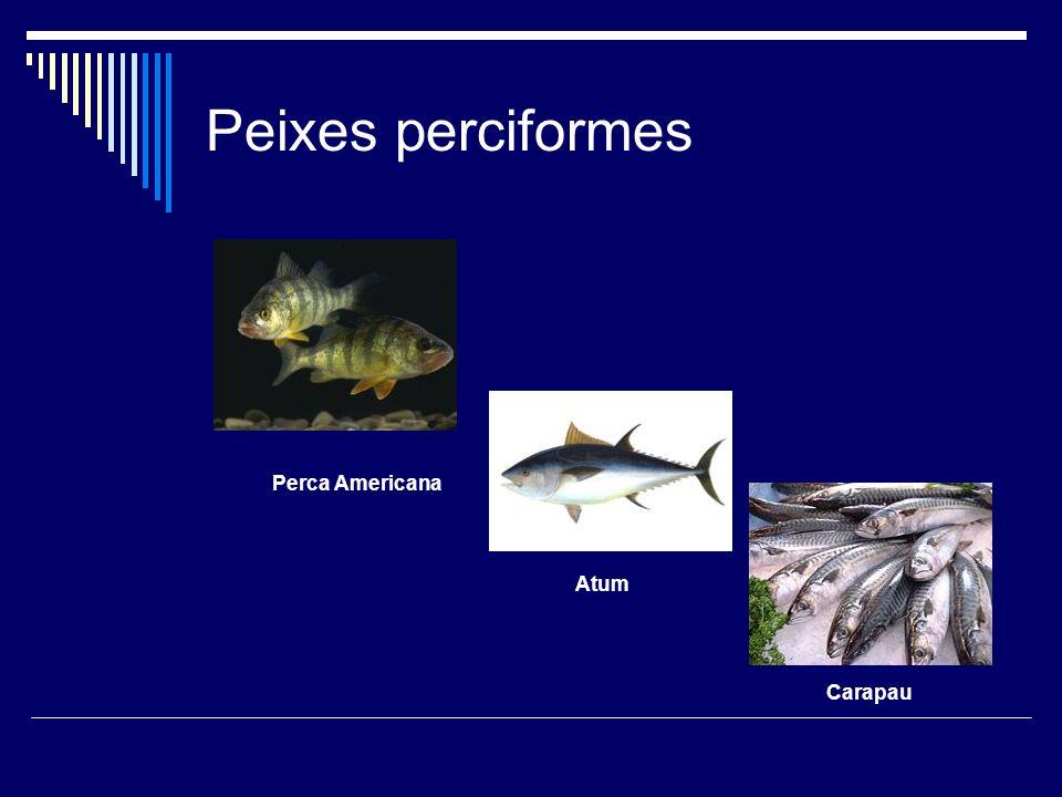 Peixes perciformes Perca Americana Atum Carapau