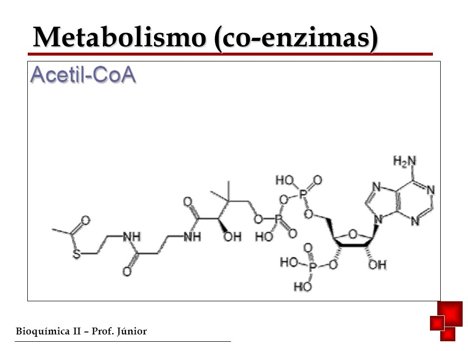 Metabolismo (co-enzimas)
