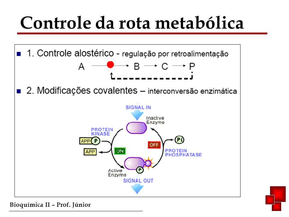 Controle da rota metabólica