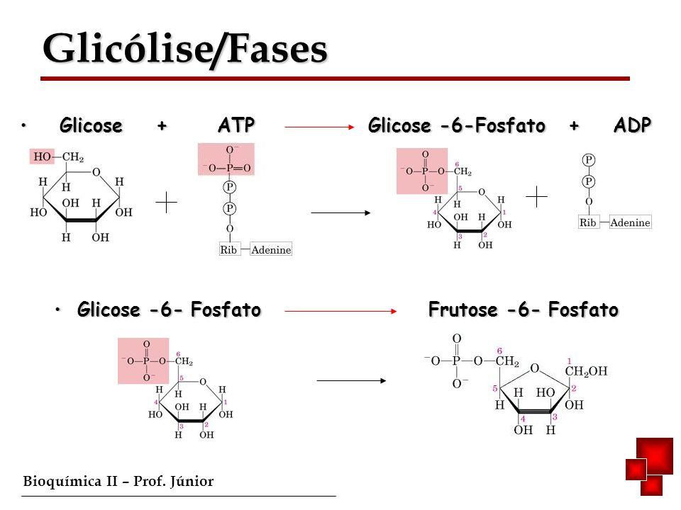 Glicólise/Fases Glicose + ATP Glicose -6-Fosfato + ADP