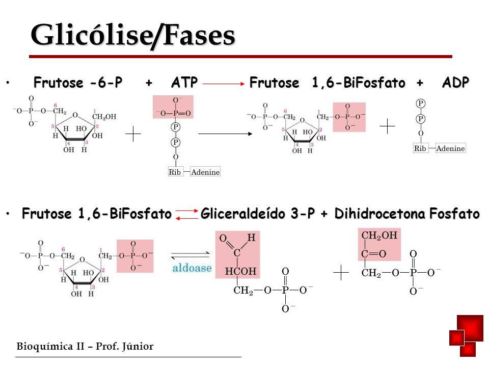 Glicólise/Fases Frutose -6-P + ATP Frutose 1,6-BiFosfato + ADP