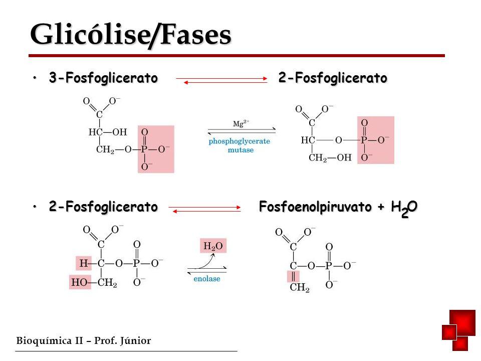 Glicólise/Fases 3-Fosfoglicerato 2-Fosfoglicerato