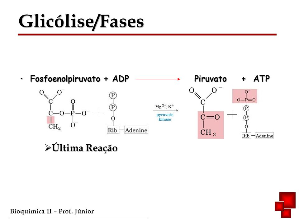 Glicólise/Fases Fosfoenolpiruvato + ADP Piruvato + ATP Última Reação