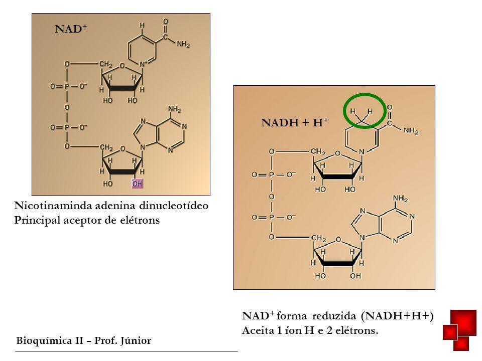 NAD+ NADH + H+ Nicotinaminda adenina dinucleotídeo. Principal aceptor de elétrons. NAD+ forma reduzida (NADH+H+)
