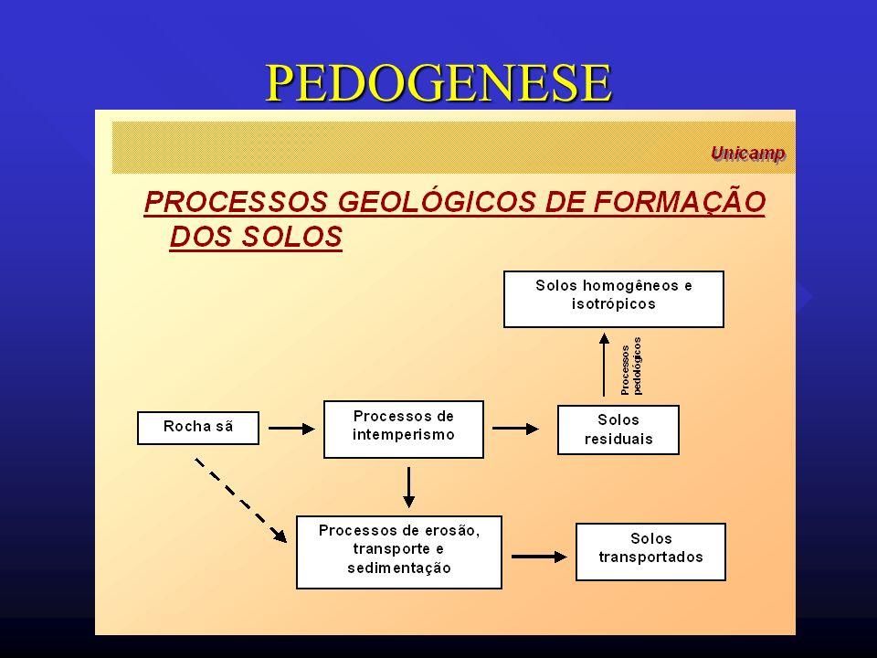 PEDOGENESE