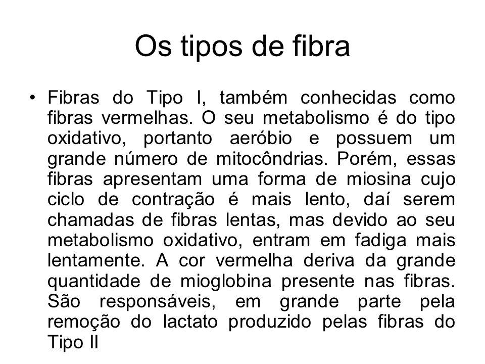Os tipos de fibra