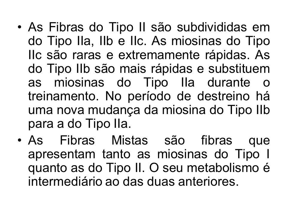 As Fibras do Tipo II são subdivididas em do Tipo IIa, IIb e IIc