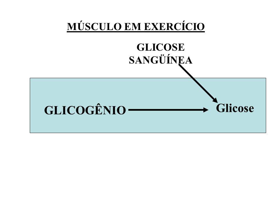 MÚSCULO EM EXERCÍCIO GLICOSE SANGÜÍNEA Glicose GLICOGÊNIO