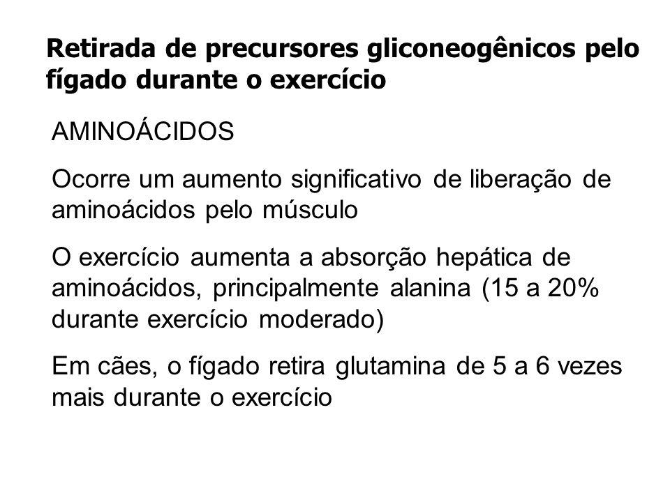 Retirada de precursores gliconeogênicos pelo fígado durante o exercício
