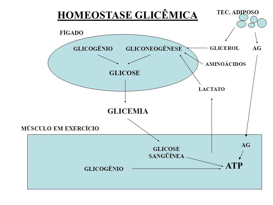 HOMEOSTASE GLICÊMICA ATP GLICEMIA GLICOSE TEC. ADIPOSO FÍGADO