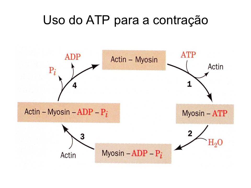 Uso do ATP para a contração