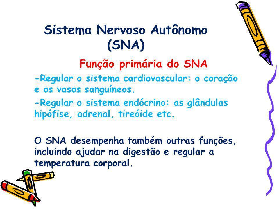 Sistema Nervoso Autônomo (SNA)