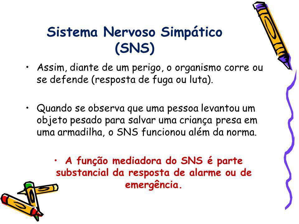 Sistema Nervoso Simpático (SNS)