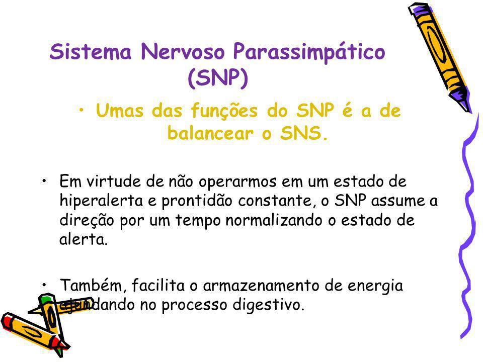 Sistema Nervoso Parassimpático (SNP)