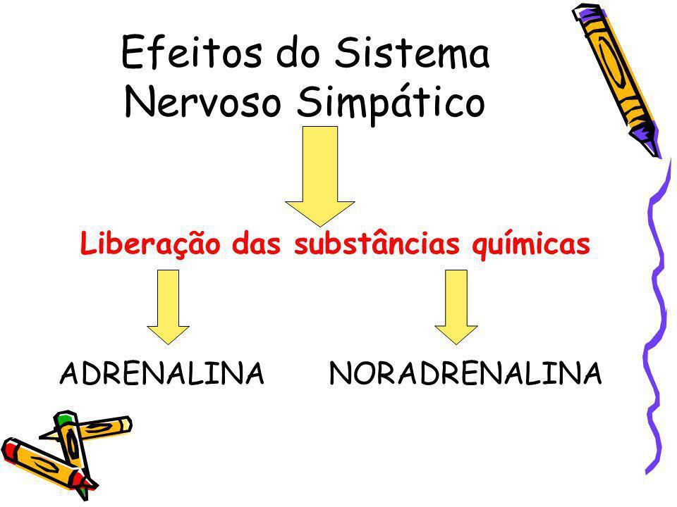 Efeitos do Sistema Nervoso Simpático
