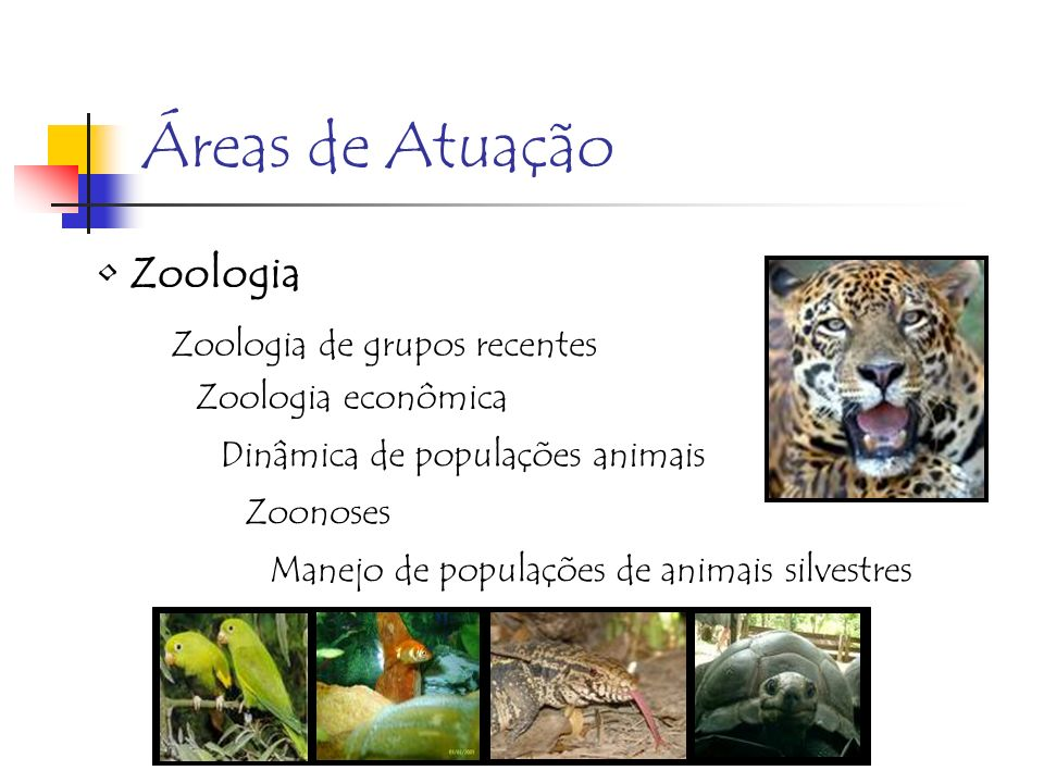 Áreas de Atuação Zoologia Zoologia de grupos recentes