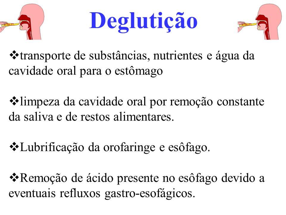 Deglutição transporte de substâncias, nutrientes e água da cavidade oral para o estômago.