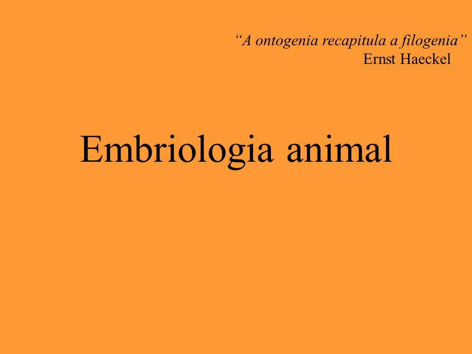 A ontogenia recapitula a filogenia