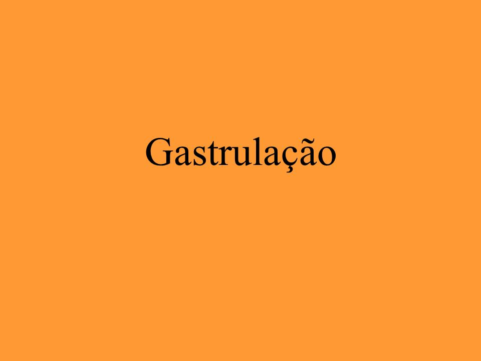 Gastrulação