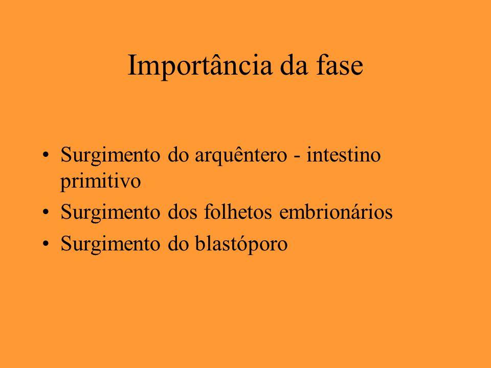 Importância da fase Surgimento do arquêntero - intestino primitivo