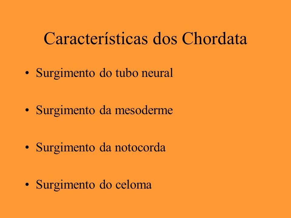 Características dos Chordata