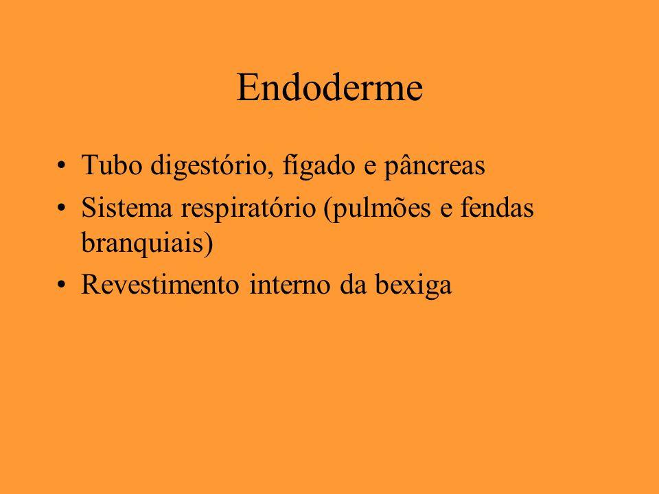 Endoderme Tubo digestório, fígado e pâncreas