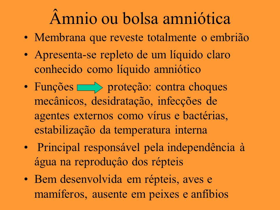 Âmnio ou bolsa amniótica