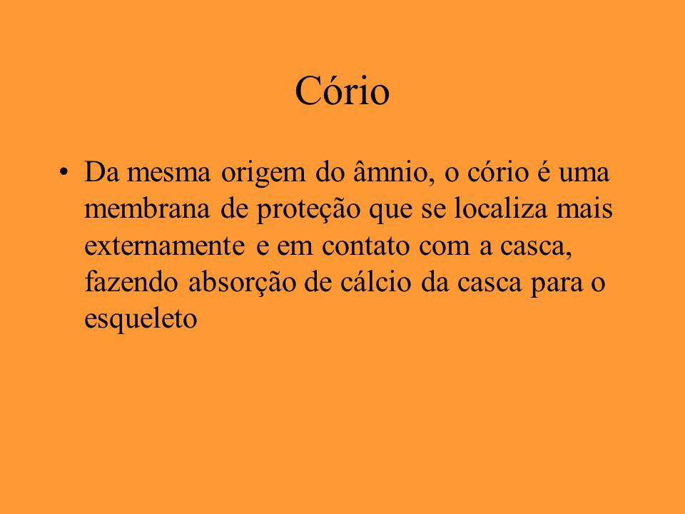 Cório