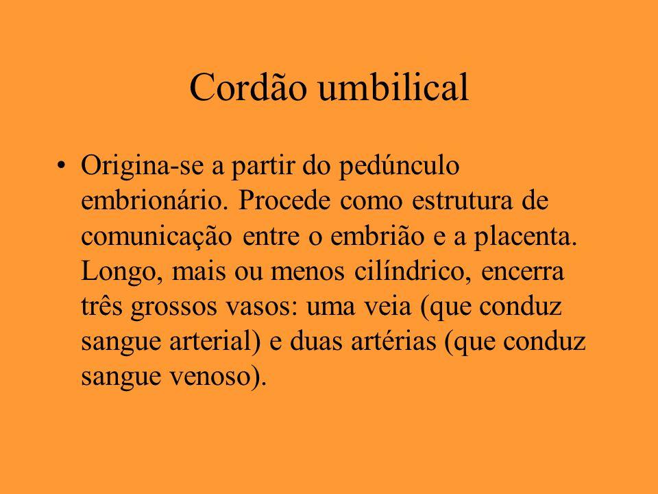 Cordão umbilical
